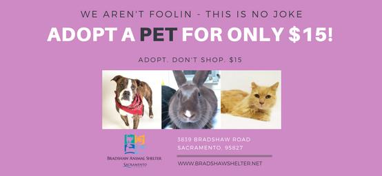 We Aren't Foolin - This is no Joke. Adopt for $15