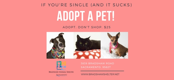 If You're Single and it Sucks - Adopt a Pet!