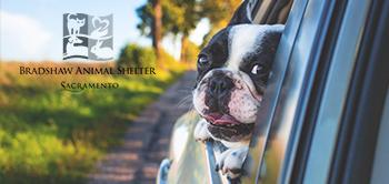Online Pet License