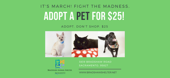 It's March - Fight the Madness. Adopt a Pet!