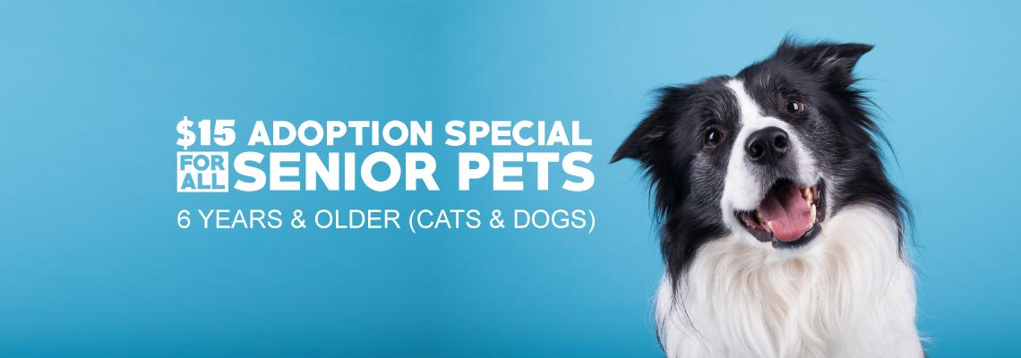 Adopt a Senior Pet Today!